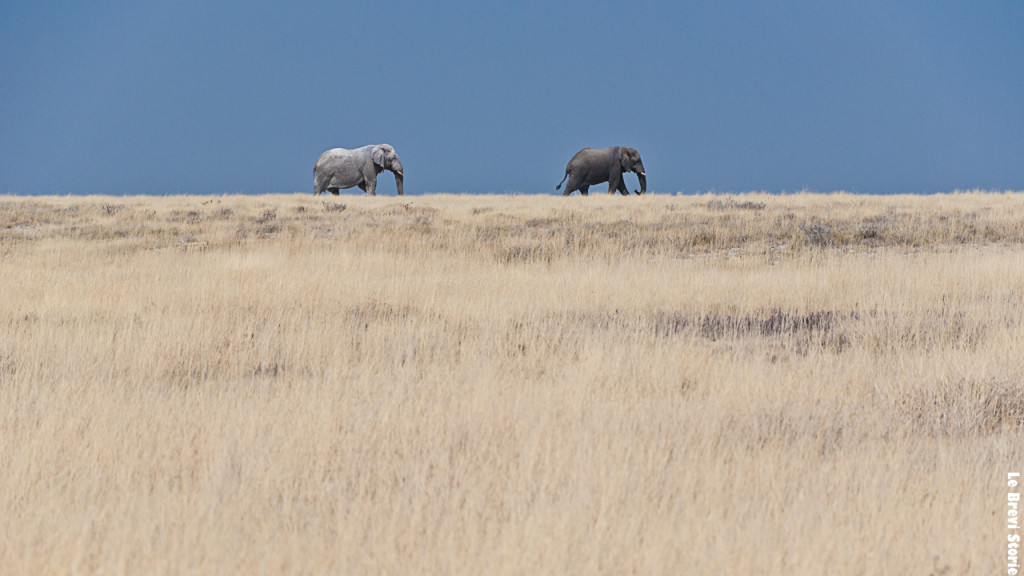 Elefanti in cammino